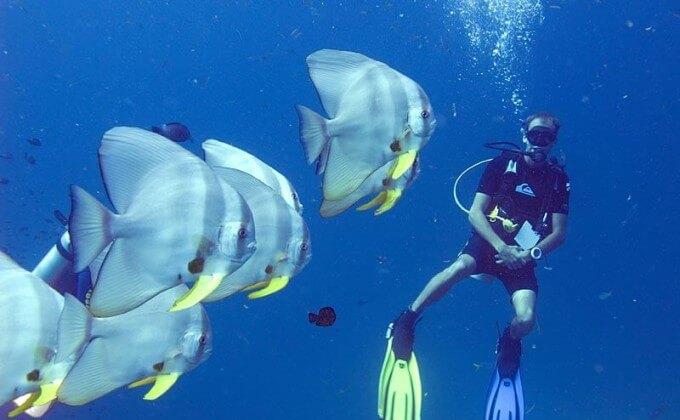 Koh Kood Divers - DestinationKohKood.com