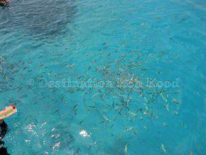 Snorkeling Trip - Koh Kood Speed Boat