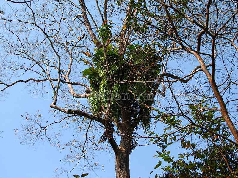 Surroundings - Khao Rearub