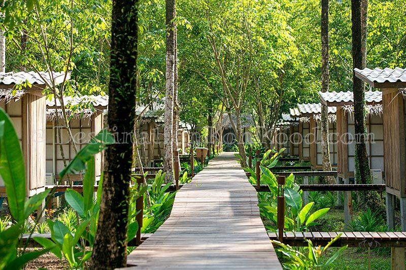 Surroundings - Jungle Koh Kood Resort